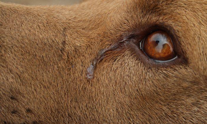 Greensboro: Dog 'Cries' Every Night While She Awaits Adoption, Shelter Shares Sad Photo As Last Hope